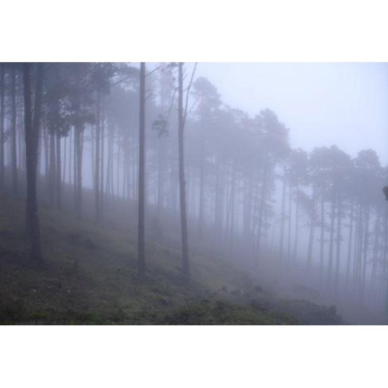 ¿Como se forma la niebla?