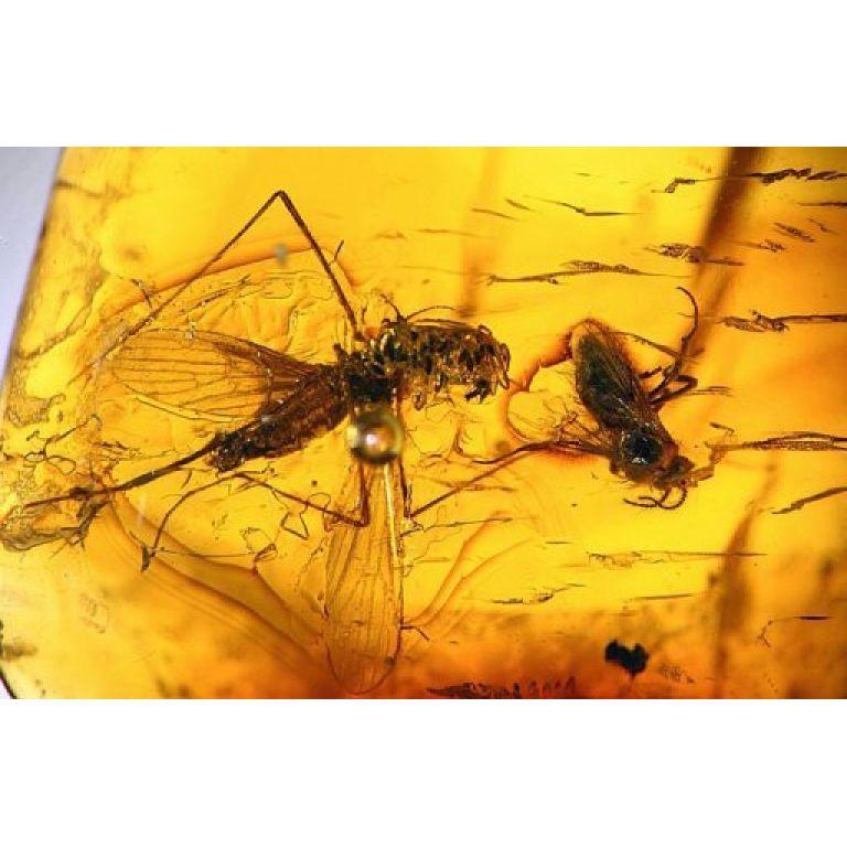 Descubren en Perú insectos fosilizados en ámbar