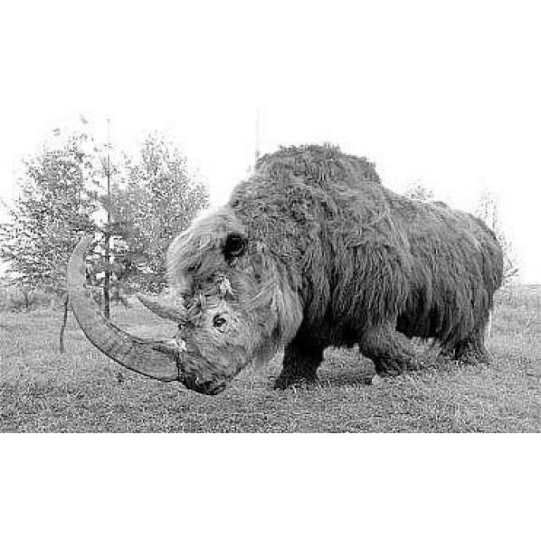 Hallan rinoceronte prehistórico en el sur de Rusia