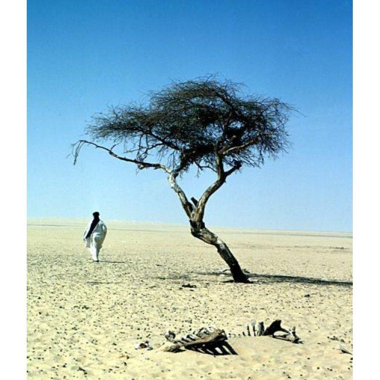 Un árbol perdido en el desierto del Sahara