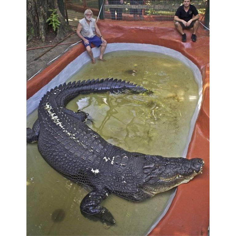 'Cassius', el cocodrilo más grande del mundo
