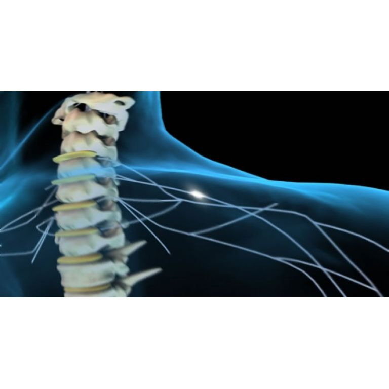 Científicos logran crear una médula espinal a partir de células madre humanas