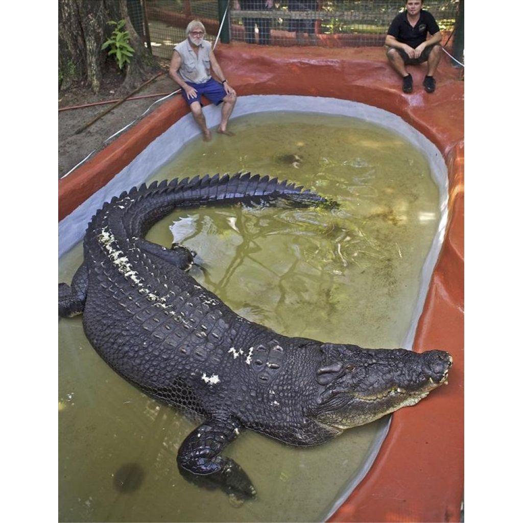 Mide 5,5 metros de largo y vive en un parque temático de Australia