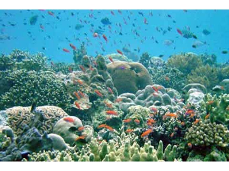 La vida marina es más diversa de lo esperado