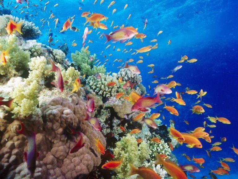 ¿Cuántas especies habitan nuestra Tierra?