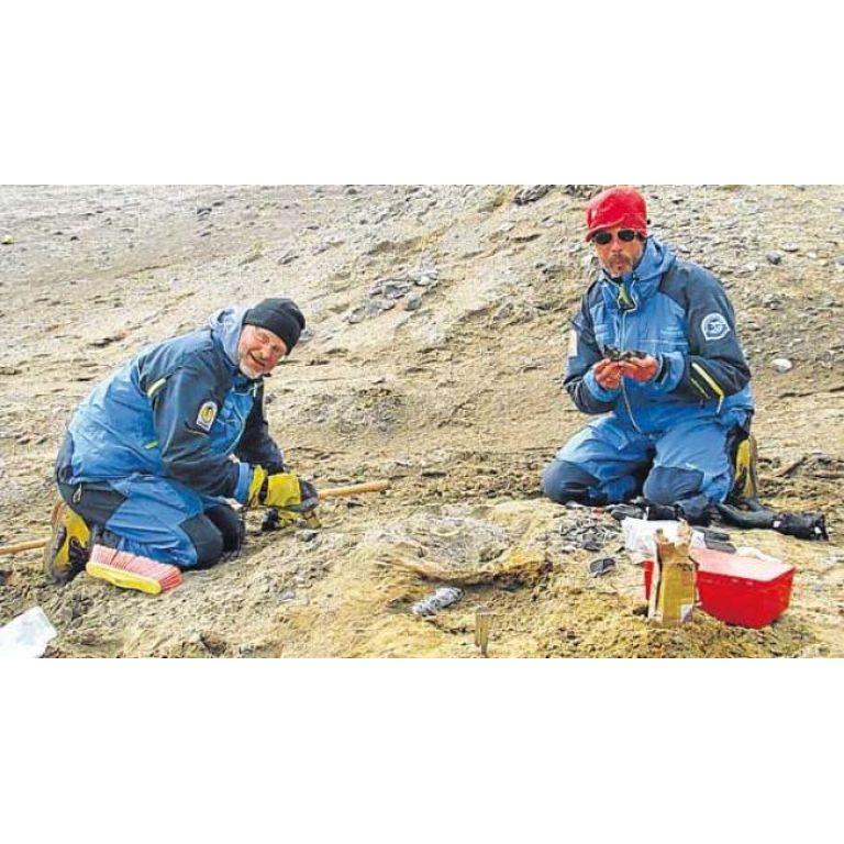 Hallan en la Antártida los restos fósiles de una ballena primitiva