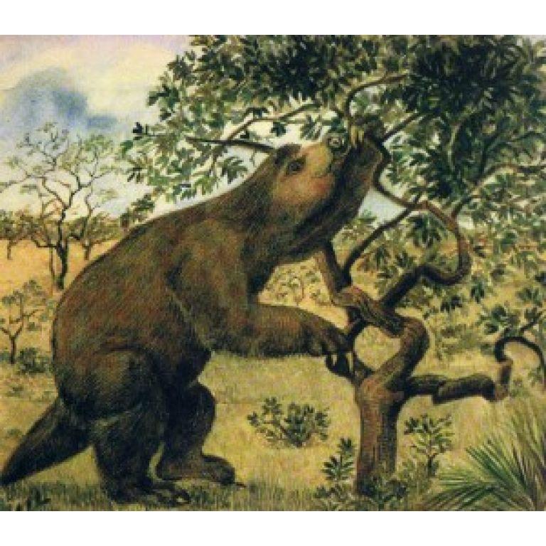 Descubren fósil de oso perezoso primitivo
